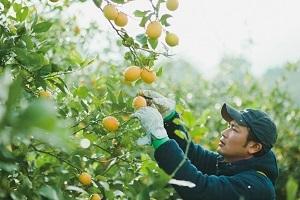 瀬戸内レモン農園Ⓡ