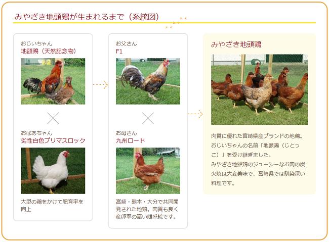 みやざき地頭鶏が生まれるまで(系統図)